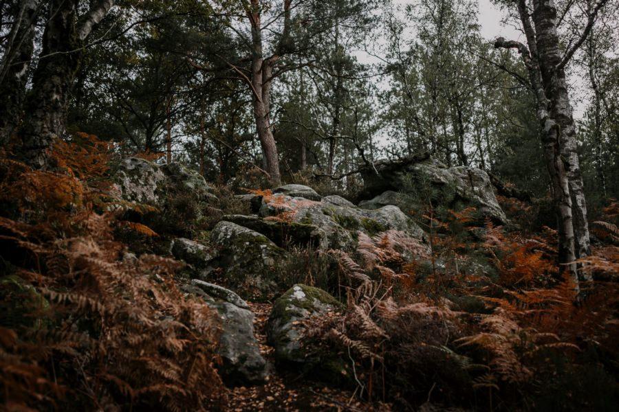 Des photos de couple en forêt de Rambouillet
